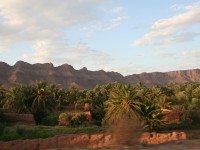Palmeral en el Valle del Dra