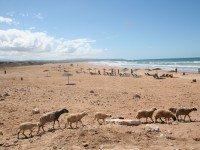 Playa de Sidi Kaouki (Al sur de Essaouira)